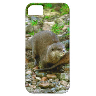 Otters making their way to the water iPhone 5 cases