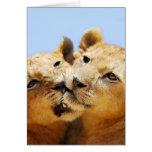 Our cute lion faces cards