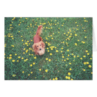 "OUR DACHSHUND-DUBLIN-THE GRASS ""IS"" GREENER ON THE CARD"