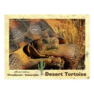 Our Desert Tortoises are Threatened w/ Extinction Postcard