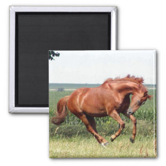 Our thoroughbred horse having fun! magnet