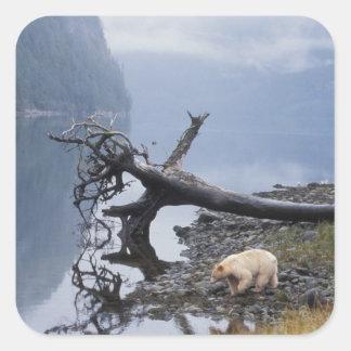 ours d'esprit, Kermode, ours noir, truie avec a Sticker Carré