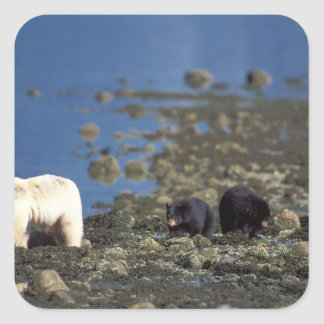 ours d'esprit, kermode, ours noir, Ursus Sticker Carré