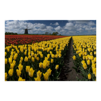 Out In The Tulip Fields Poster