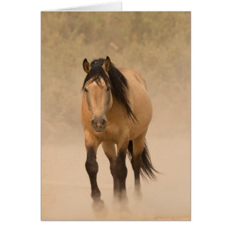 Out of the Dust Wild Horse Greeting Card