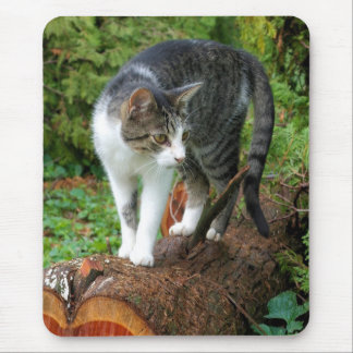 Out on a Cat Walk - Kitty Mousepad