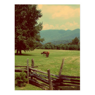 Out to Pasture Postcard