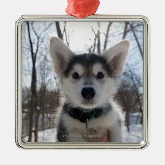 Outdoor portrait of husky dog puppy metal ornament