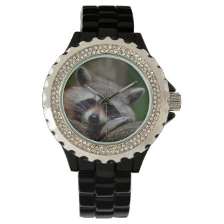 Outrageously Cute Baby Raccoon Watch