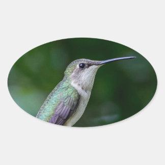 Oval Stickers, Glossy Oval Sticker - Hummingbird