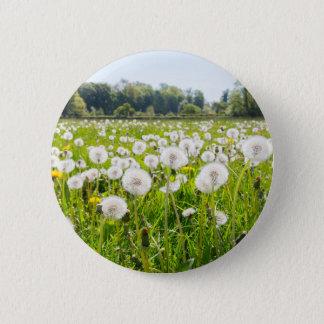 Overblown dandelions in green dutch meadow 2 inch round button