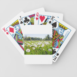 Overblown dandelions in green dutch meadow bicycle playing cards