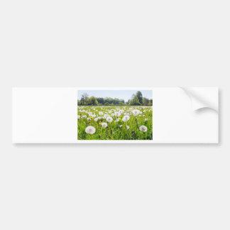 Overblown dandelions in green dutch meadow bumper sticker