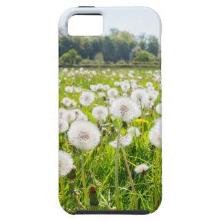 Overblown dandelions in green dutch meadow iPhone 5 case