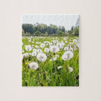 Overblown dandelions in green dutch meadow jigsaw puzzle