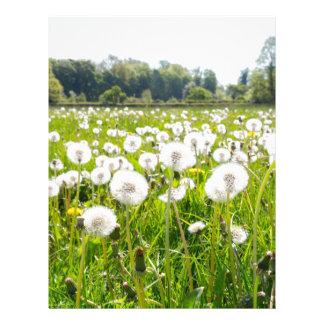 Overblown dandelions in green dutch meadow letterhead