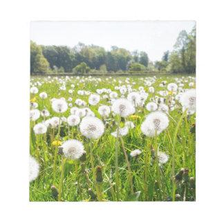 Overblown dandelions in green dutch meadow notepad