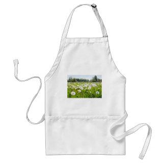 Overblown dandelions in green dutch meadow standard apron