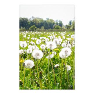 Overblown dandelions in green dutch meadow stationery