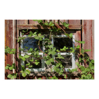 Overgrown Window Poster