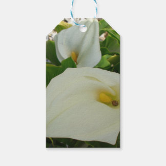 Overhead View Of Two Calla Lilies In A Garden Pack Of Gift Tags
