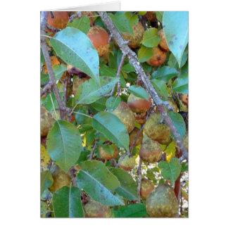 Overladen Pear Tree Card