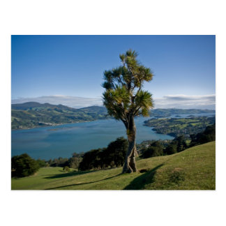 Overlooking Dunedin Bay Postcard