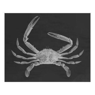 Oversized Crab Triptych Poster Print