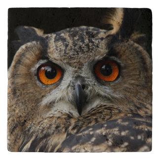Owl_20180202_by_JAMFoto Trivet