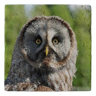 Owl_20180219_by_JAMFoto Trivet