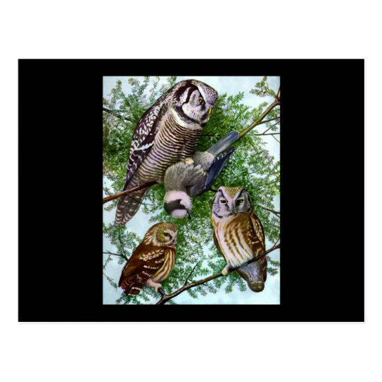Owl Art Postcard