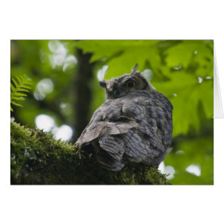 Owl at Nisqually Card