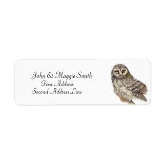 Owl, Bird Collection