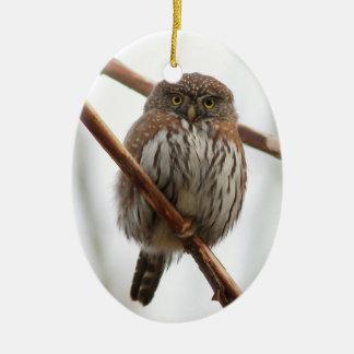 Owl Christmas Ornament - Northern Pygmy-Owl