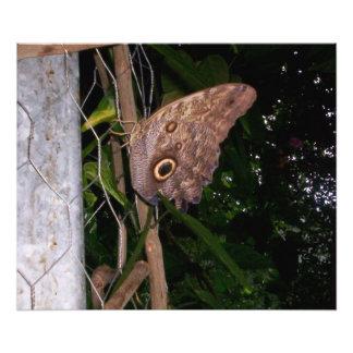 Owl Eye Moth Photographic Print
