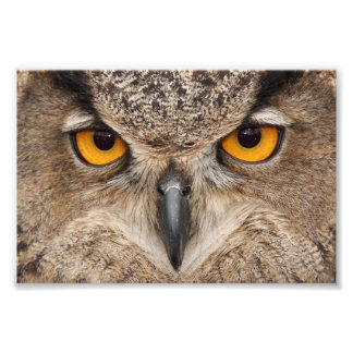 Owl eyes art photo