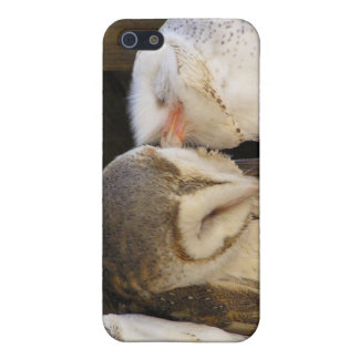 Owl kisses iPhone 5 cover