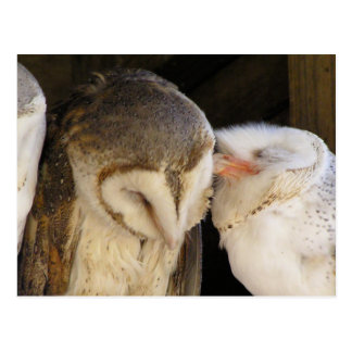 Owl Kisses! Postcard