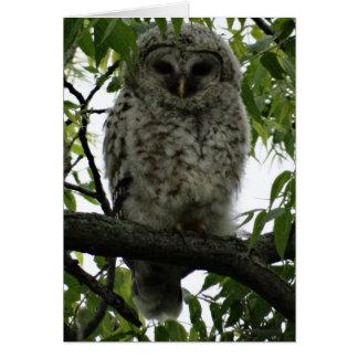 Owl Luv Card