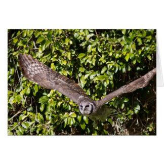 Owl Milky Eagle Card