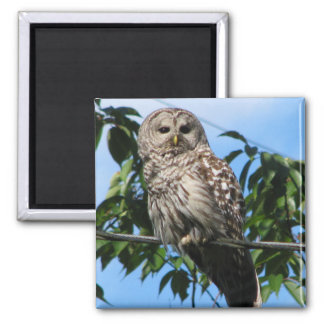 Owl On Wire Magnet