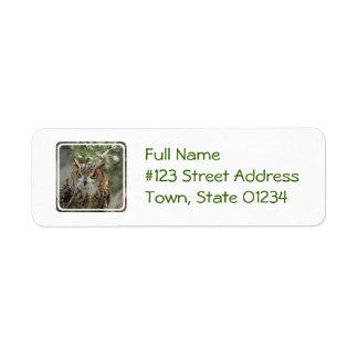 Owl Perch Custom Return Address Labels