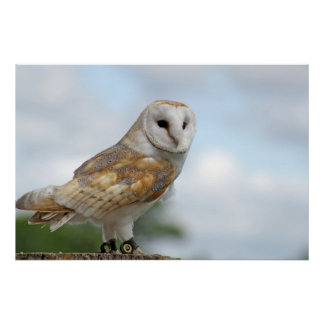 owl picture poster