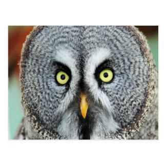 Owl portrait postcard