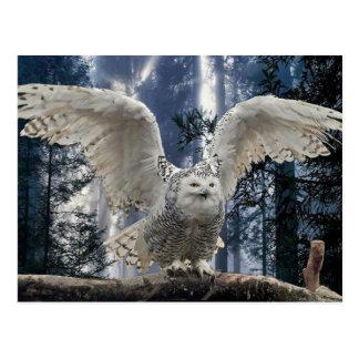owl postcard
