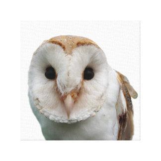 Owl wild animal photo kids room canvas print