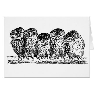 OWLS ON BRANCH NOTECARD