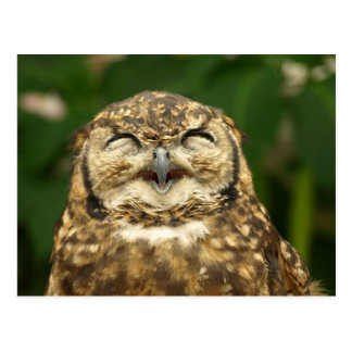 owl's smile!! :) postcard