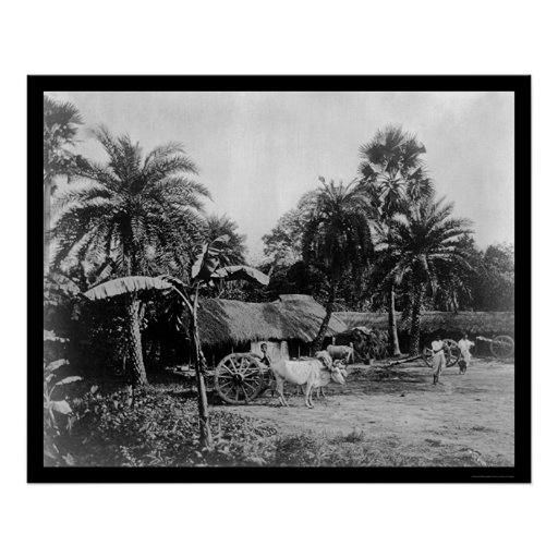 Ox Cart Village Scene Senegal Africa 1898 Poster