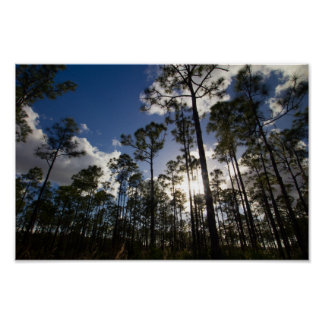 Oxbow Eco-centre trees, Fort Pierce, Florida Poster